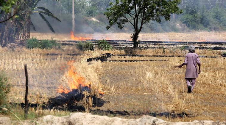 Farmers in Sangrur took to burning stubble on Thursday