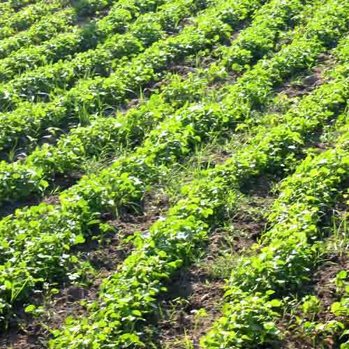 Govt relaxes curb on export of organic farm produce