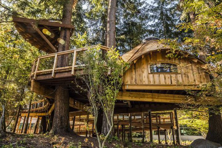 Microsoft builds treehouse offices for employees