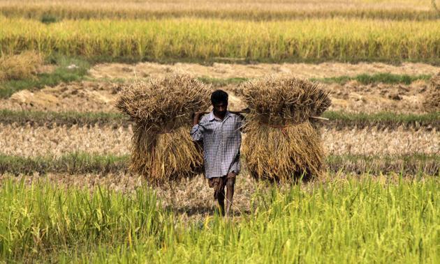 Govt revises up 2016-17 grain output to record 275.68 million tonnes
