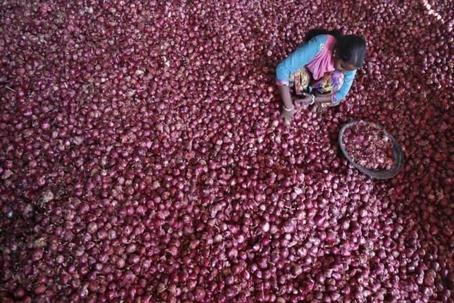 govt-notifies-minimum-export-price-of-onion-at-850-per-tonne