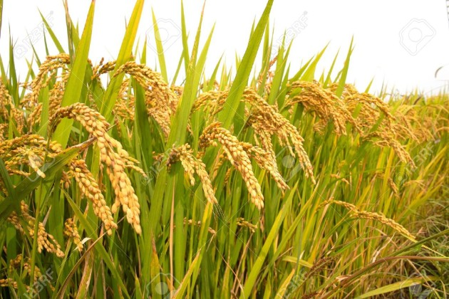 agriculturalcredittargetenhancedto165lakhcrorerupeesinthenextfiscal