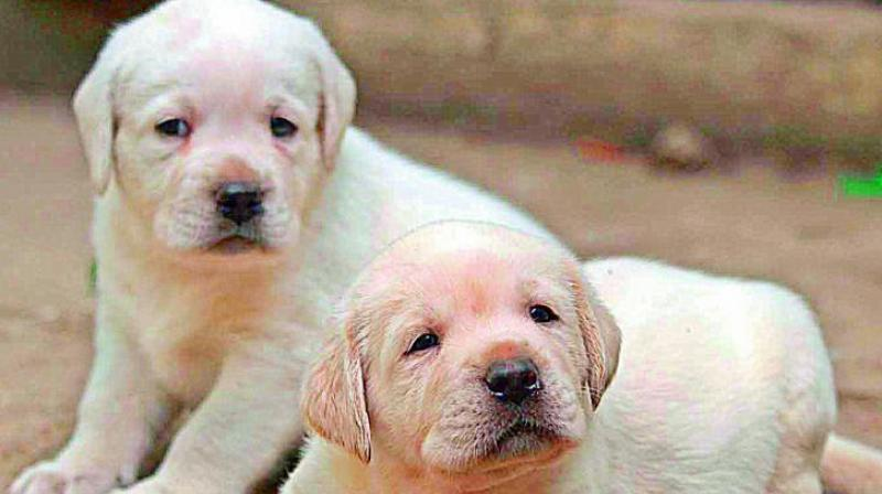4 puppies sleeping in garbage dump burnt alive in Hyderabad