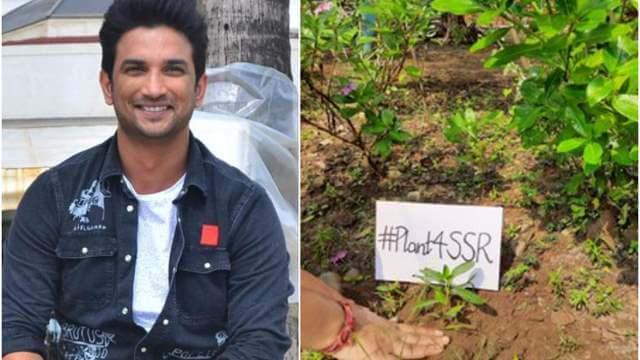 Sushant Singh Rajput fans plant over 1 lakh trees in