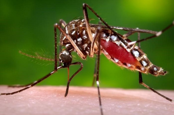Rise in number of dengue cases in Telangana's urban centres