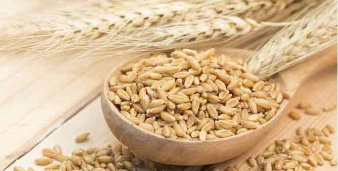 barleycutsbadcholesterolheartdiseaserisk