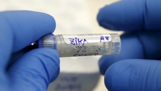 Zika vaccine comes closer to reality