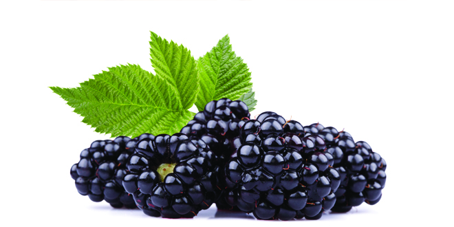 Black Raspberry Touted For Health Benefits