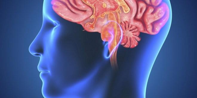Depression can alter brain