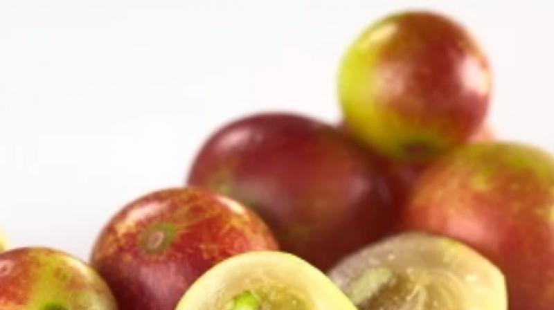 Amazonian fruit may help fight obesity and metabolic diseases: study