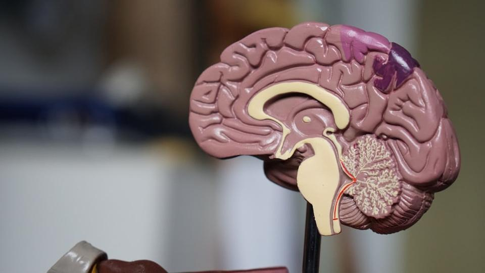 Brain circuit linked to eating disorders: Study