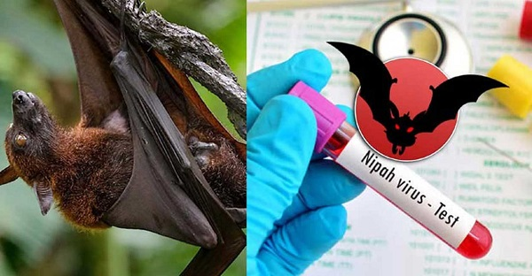 Passengers from Kerala to be screened for Nipah in Tamil Nadu
