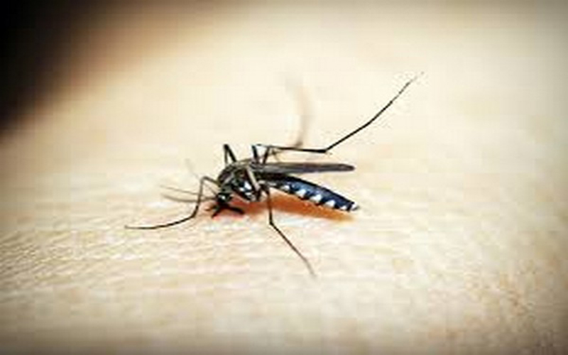 Anaemia can lead to cause of dengue: Study