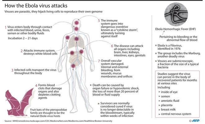 ebolavaccinehighly'effective'