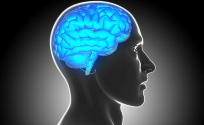 Early life exercise promotes brain health