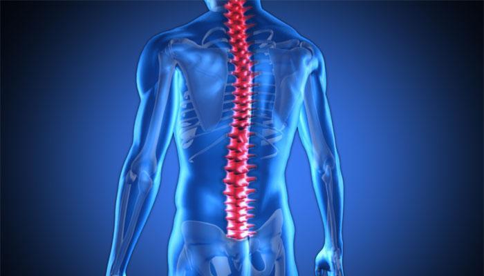 spinalcorddeterminesleftorrighthandedness:study