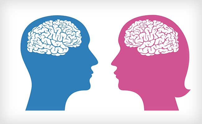 Male and female brains work  the same way