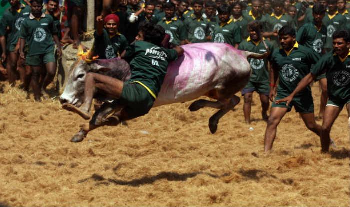 Jallikattu held in Tamil Nadu's Alanganallur, 47 left injured