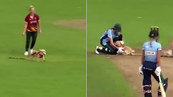 Cricket match halted as dog picked up the ball and ran around the field.