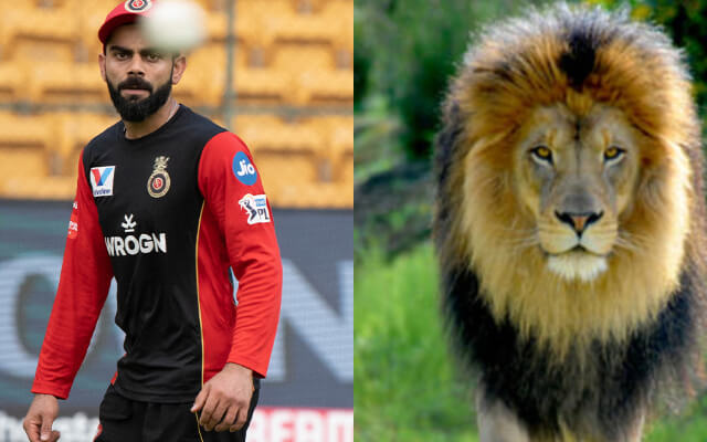 RCB came up with a post on Virat Kohli on World Lion Day 2020