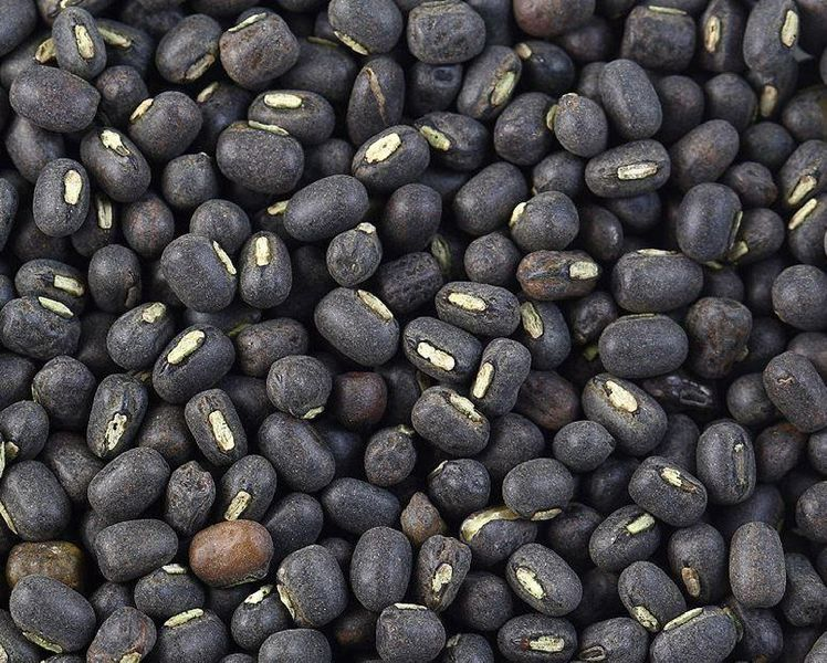 Telangana Govt ready to purchase entire black gram crop at MSP