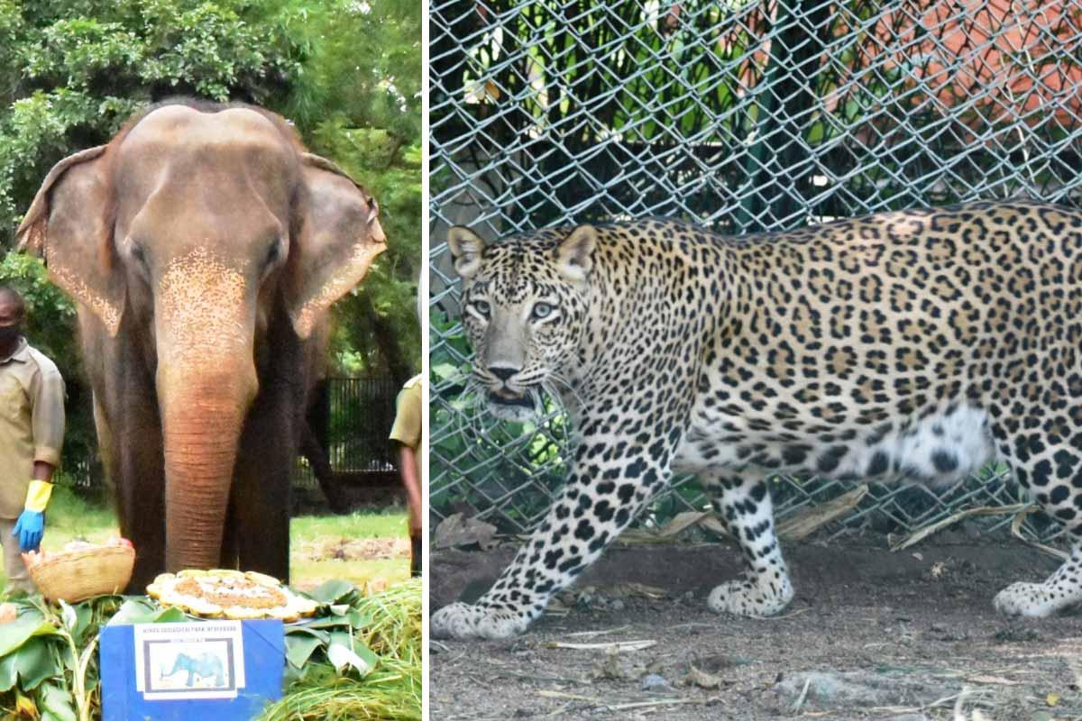 elephantleoparddiesatnehruzoologicalpark
