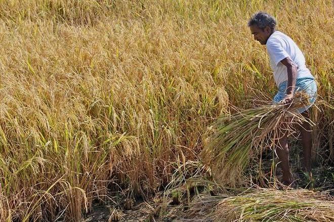 Telangana to buy cyclone-hit paddy crops
