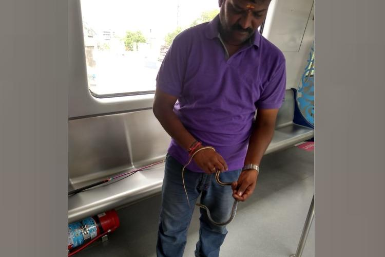 Two-feet-long snake found in Metro train