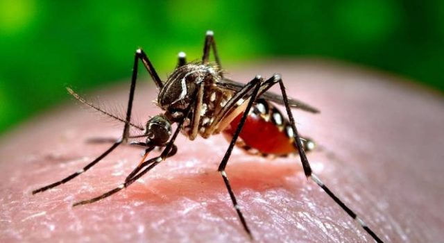 zika-cases-keep-rgia-officials-on-toes