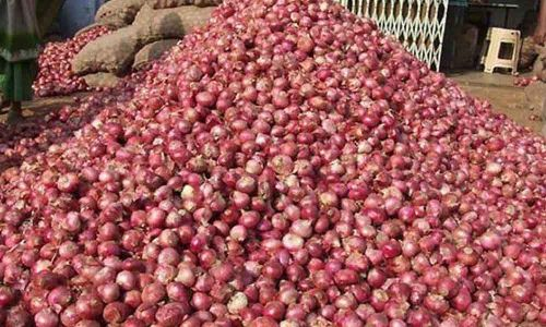 TS to import 500 MT onion from Egypt