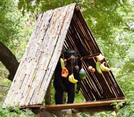Nehru Zoo chimpanzee turns 33