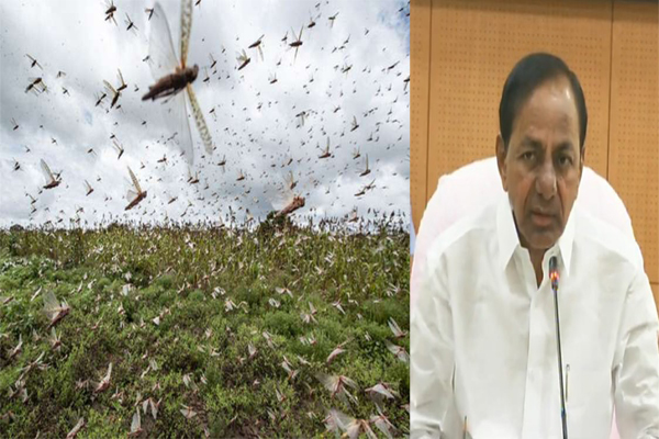 Telangana takes measures to restrict movement of locust swarms: CM KCR