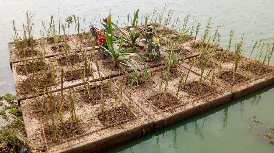 India's biggest floating island released in Neknampur lake