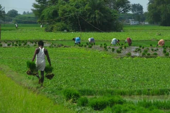 Telangana govt issues notification for crop insurance