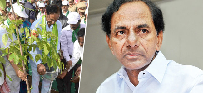 3rd phase of Haritha Haram to begin in Telangana  today