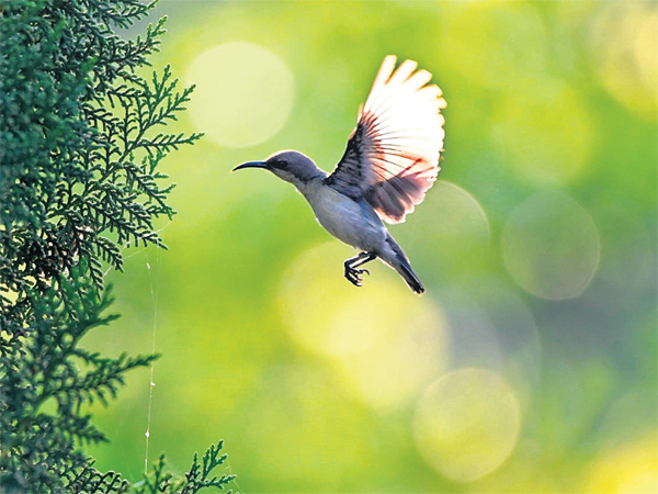 Telangana Forest dept to conduct Bird Walk on Dec 14,15