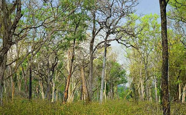 Administrative nod for three forest blocks in Hyderabad