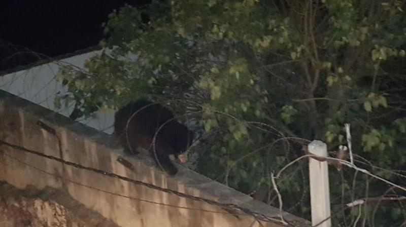 Wild bear escape from its enclosure in Nehru Zoological Park