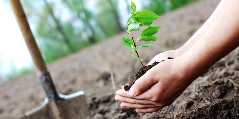 GHMC to plant 1 crore saplings