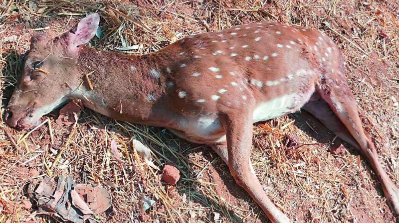 Deer found dead in University of Hyderabad