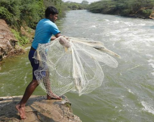 Further fillip on cards for fisheries sector in Telangana