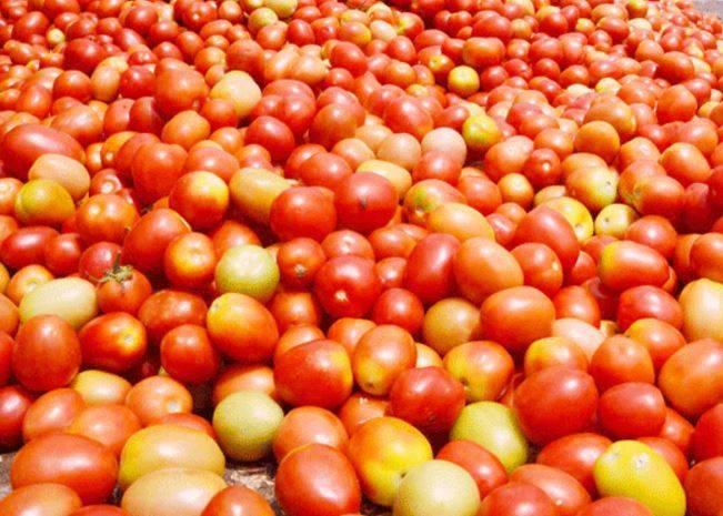 Tomato prices zoom up to Rs.80 a kg