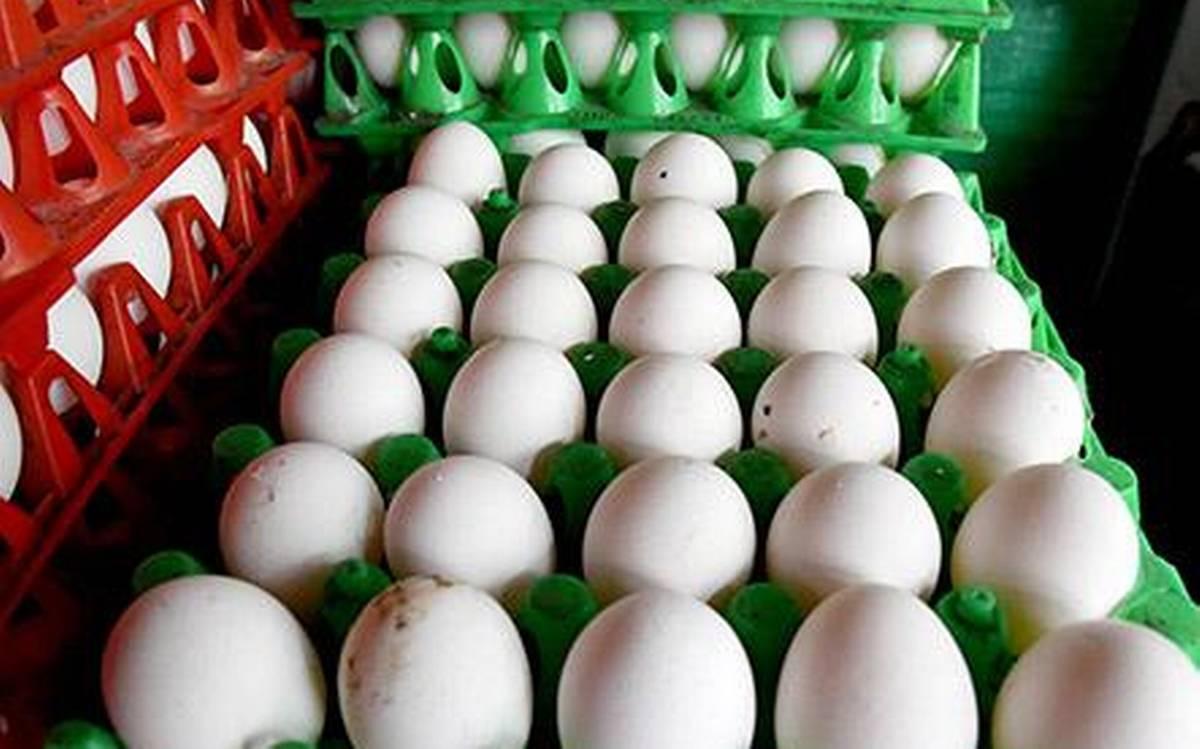 eggpricesdropsinhyderabad