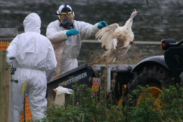 Avian flu kills 230 birds on Netherlands farm, more than 37,000 slaughtered