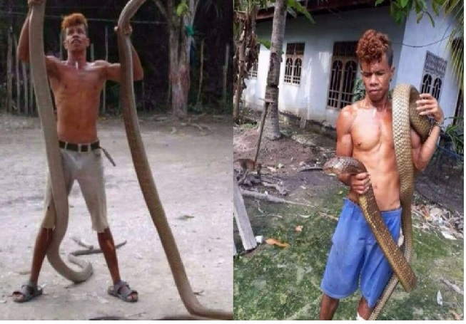 Meet the man who rules over 4m-long king cobras