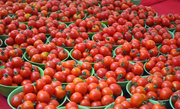 With tomatoes at Rs 300 a kg, Pakistan minister blames suspension of trade with India for price hike