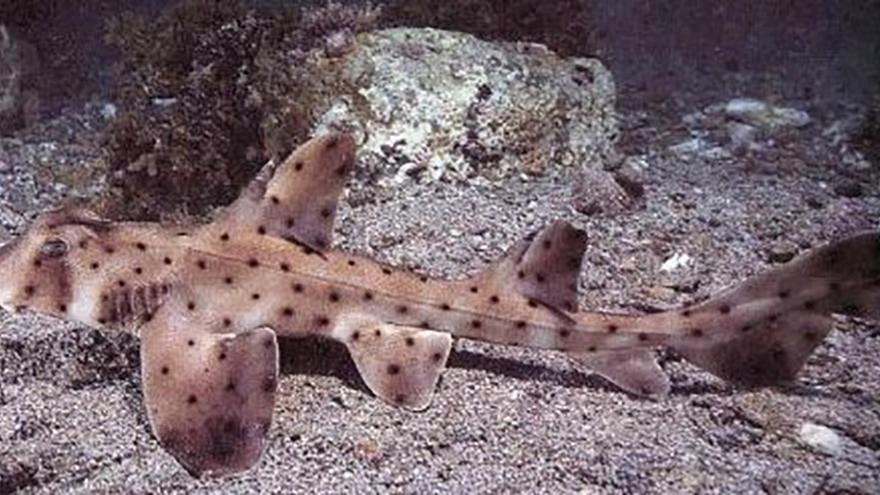 Thieves steal San Antonio Aquarium shark in a baby carriage
