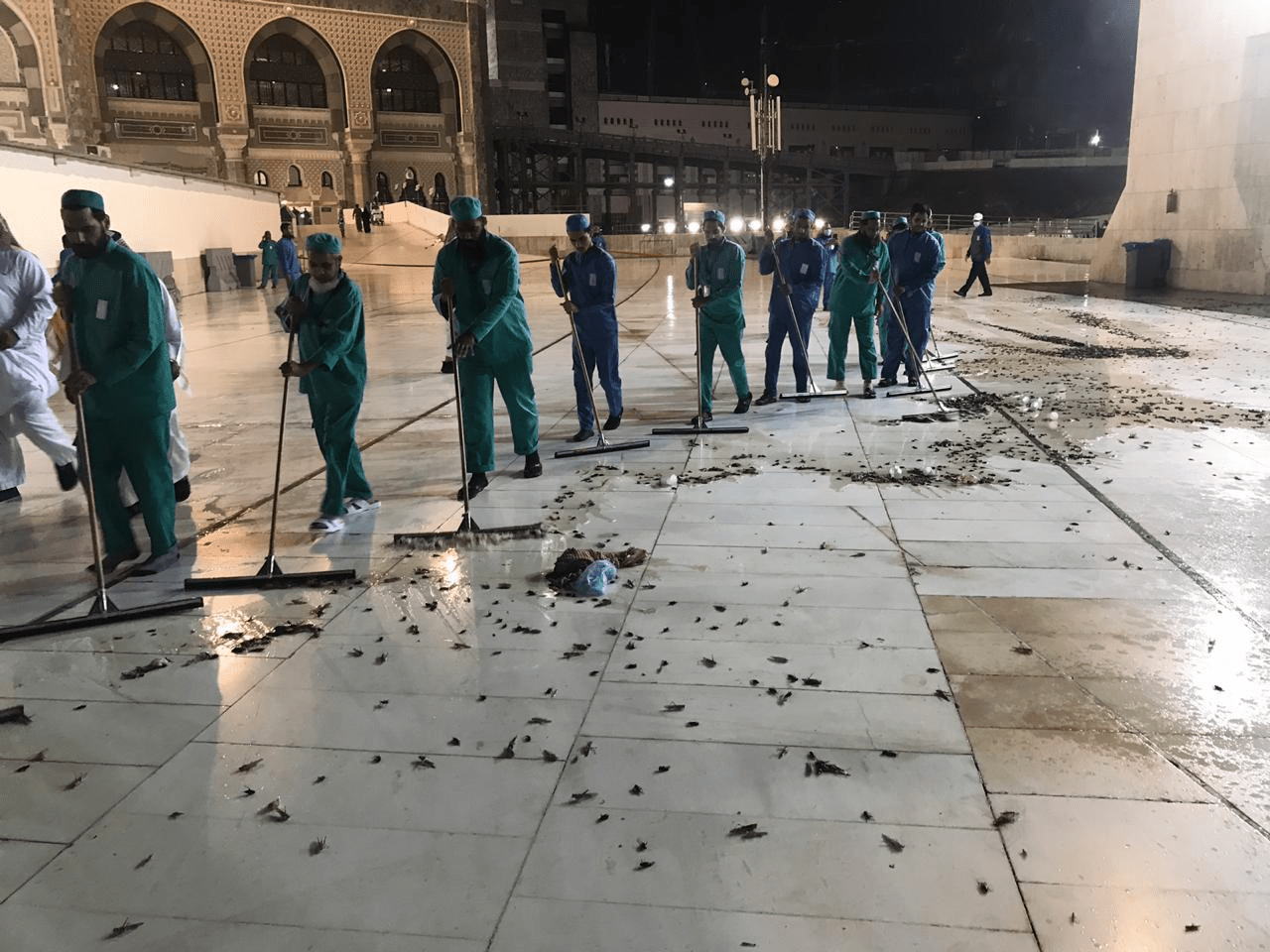 Mecca's Grand Mosque plagued by swarm of locusts