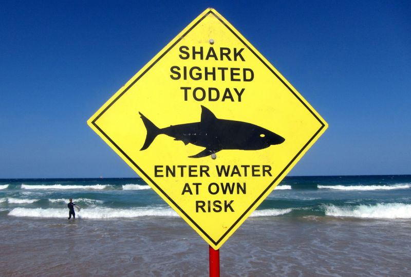 Diver Survives Bull Shark Mauling In Australia