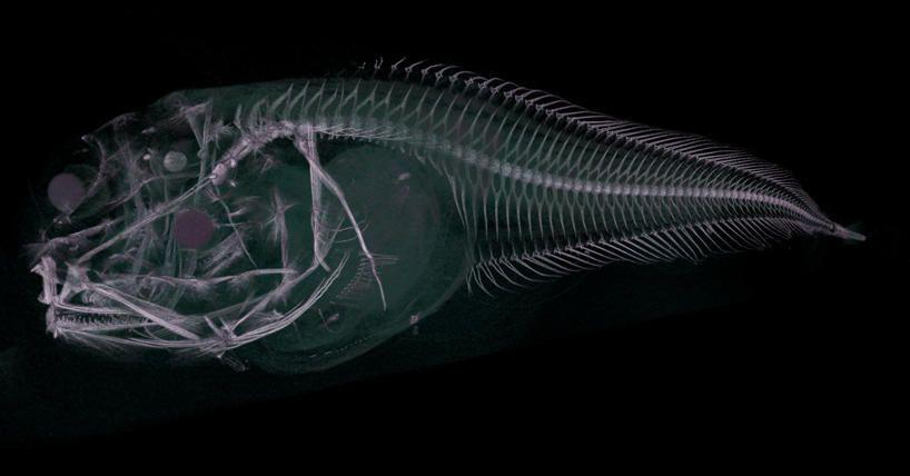 Scientists discover new fish species in ocean